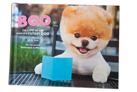 A book about Boo, the cutest dog in the world